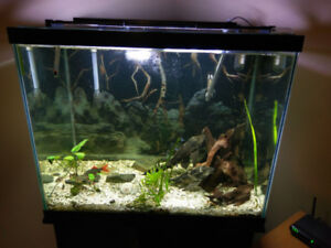56 gallon Fish Tank/Acessories and Fish For Sale