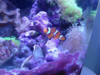 Saltwater fish and coral frags