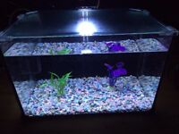 Glass fish tank with glass lid 28 Ltr full set-up