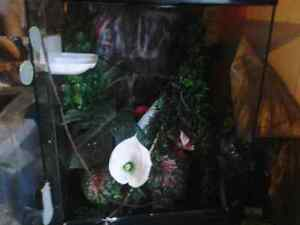 2 northern crested geckos with alot extra 1male 1 femae Cornwall Ontario image 3