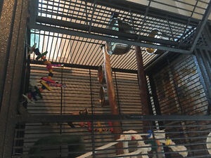 Beautiful Baby Sun Conure Looking for a NEW HOME