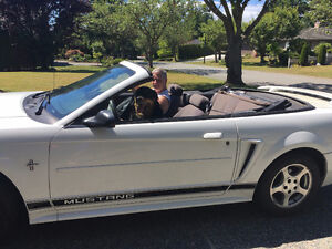 2001 Ford Mustang Black/Black Convertible