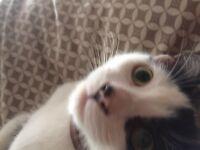 Kitten for a good home