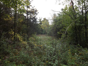 3.93 acres of treed land, 8 mins N of the 401 - Lot 1 Gorr Rd