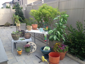 Showcase your garden with unique clay pots and one of a kind art
