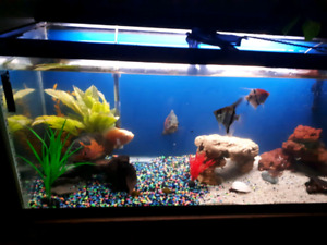 Fish tank and fish and accessories for sale 150 obo