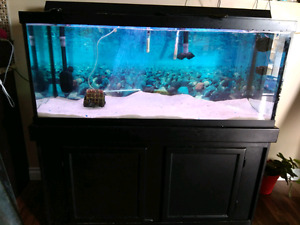 75 gallons fish tank with stand