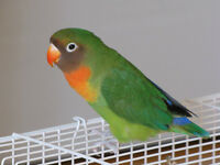 Playful Parrots Bird Boarding: loving care for birds/small pets