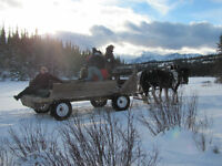 Hinton / Jasper Pack Trips, Hay Rides & Harness Training