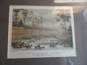 British Decoy set vintage litho / 1886 - RALPH PAYNE-GALWEY London Ontario image 5