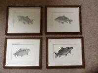 4 limited carp fishing pencil drawings