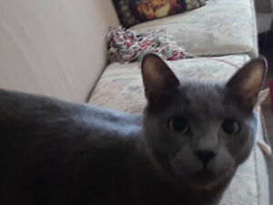 LOST TWO MALE CATS - PORT COLBORNE, NEAR WELLINGTON ST. -