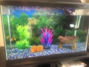 Fish Tank Complete with Fish!