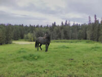 Interested in semi offgrid, self reliance Horse Ranch?