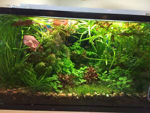 Looking for 30-55g aquarium (for JUNE)
