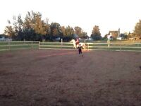 Horse Boarding/ Lessons