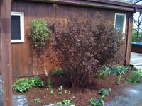 YARD WORK - GARDENS - LAWN CUT - 343-364-4400