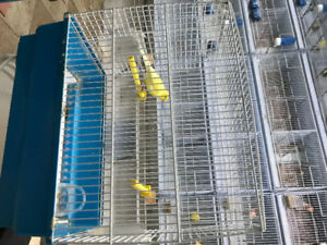 Male canarie and cage for sale