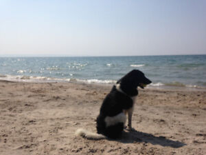 Wasaga Beach/Woodland Beach For Rent