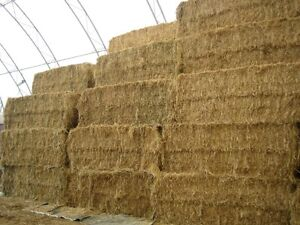 All kinds of hay and straw for sale