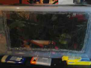 2 northern crested geckos with alot extra 1male 1 femae Cornwall Ontario image 4