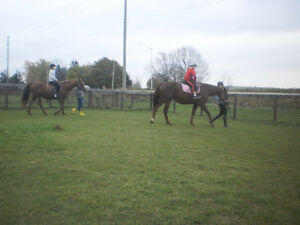 Horse riding for kids 4+yrs old