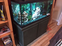 33 gallon tank, filtering system, gravel, ornaments and fish