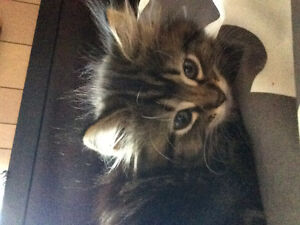 Kitten to rehome