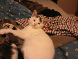 5 month old kittens free to a good home! London Ontario image 2