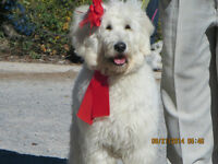 Dog Walker/day care/overnight care/Groomer visits & ??