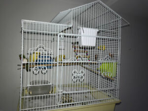 One male canary for sale with nice big cage and accessories