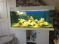 220 litre fish tank and stand