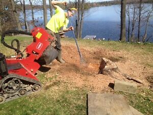 AFFORDABLE STUMP GRINDING AND REMOVAL. Kingston Kingston Area image 4