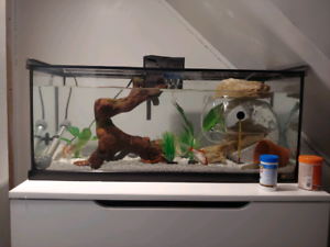 Fish, redclawed crabs, and everything needed