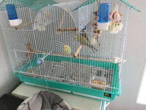 Three budgies with cage and food, need to be gone ASAP,