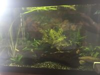 Fish tank for sale with tropical fish full set up