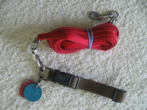 LIKE-NEW SMALL DOG NYLON COLLAR AND 25-FOOT WALKING LEAD