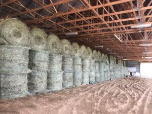 First Cut High Quality Hay for Sale