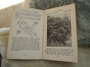ANTIQUE BOOK - TREES & SHRUBS