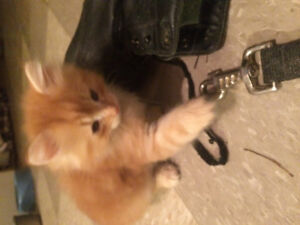 2 gorgeous kittens for sale