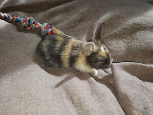 Bunny looking for his fur ever loving home,