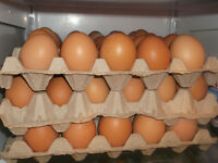 30 FRESH BROWN EGGS FOR $10/ CAN DELIVER ( FREE RANGE)