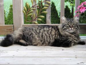 BELOVED CAT MISSING