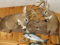 Taxidermist - Taxidermy Work