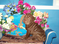 CHINESE SHAR - PEI PUPPIES * 1  GIRL LEFT OPEN TO OFFERS