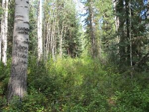 2 Acre Lot For Sale Residential Neighborhood Prince George British Columbia image 3