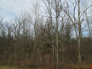 39 Acre Bush Lot For Sale - Welland