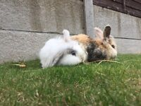 Rabbits need re homing
