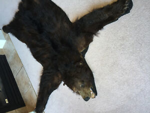 Black Bear Fur / Rug