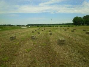 Hay and Straw for Sale Sarnia Sarnia Area image 2